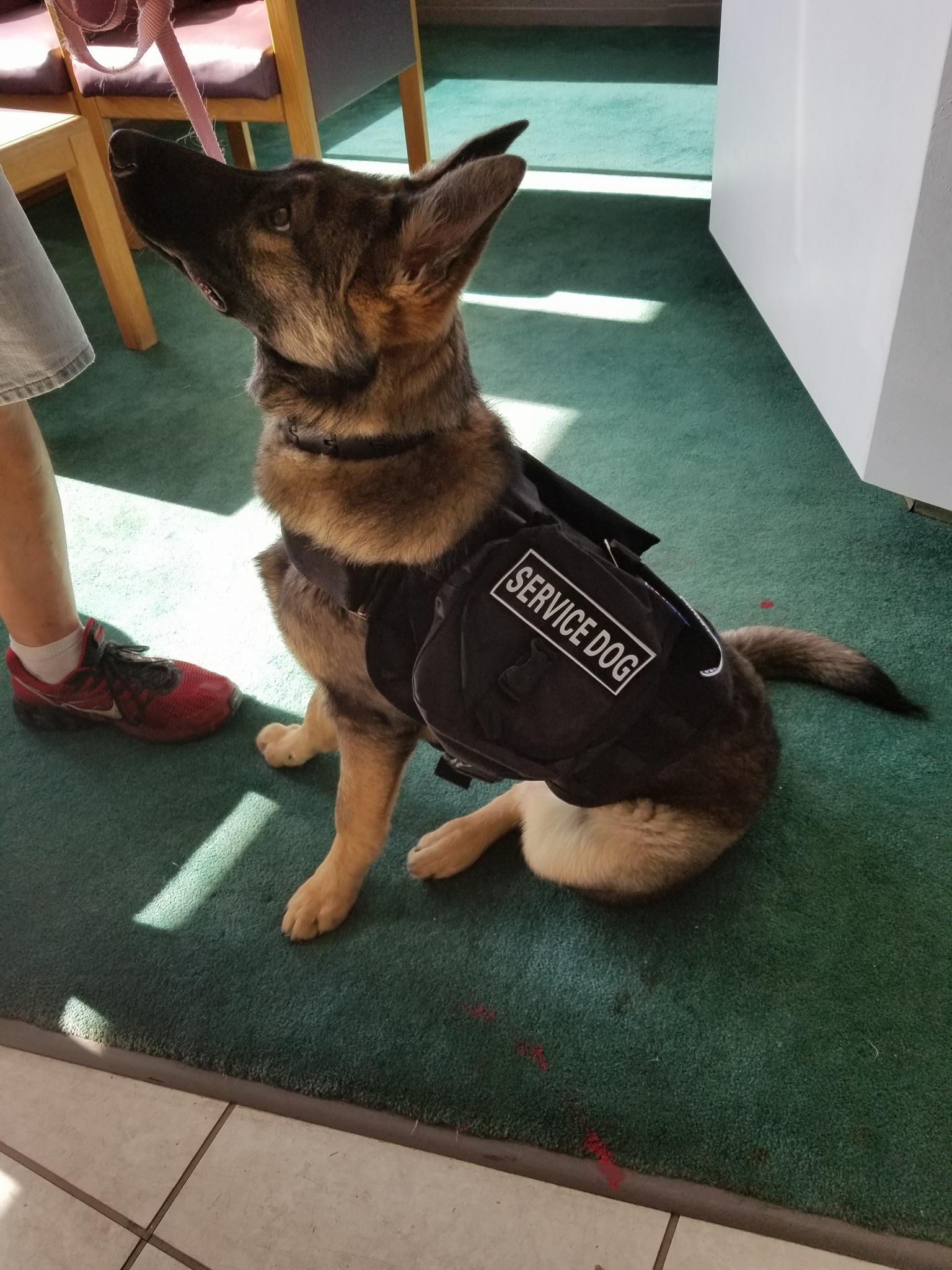 Keena Service Dog Graduate