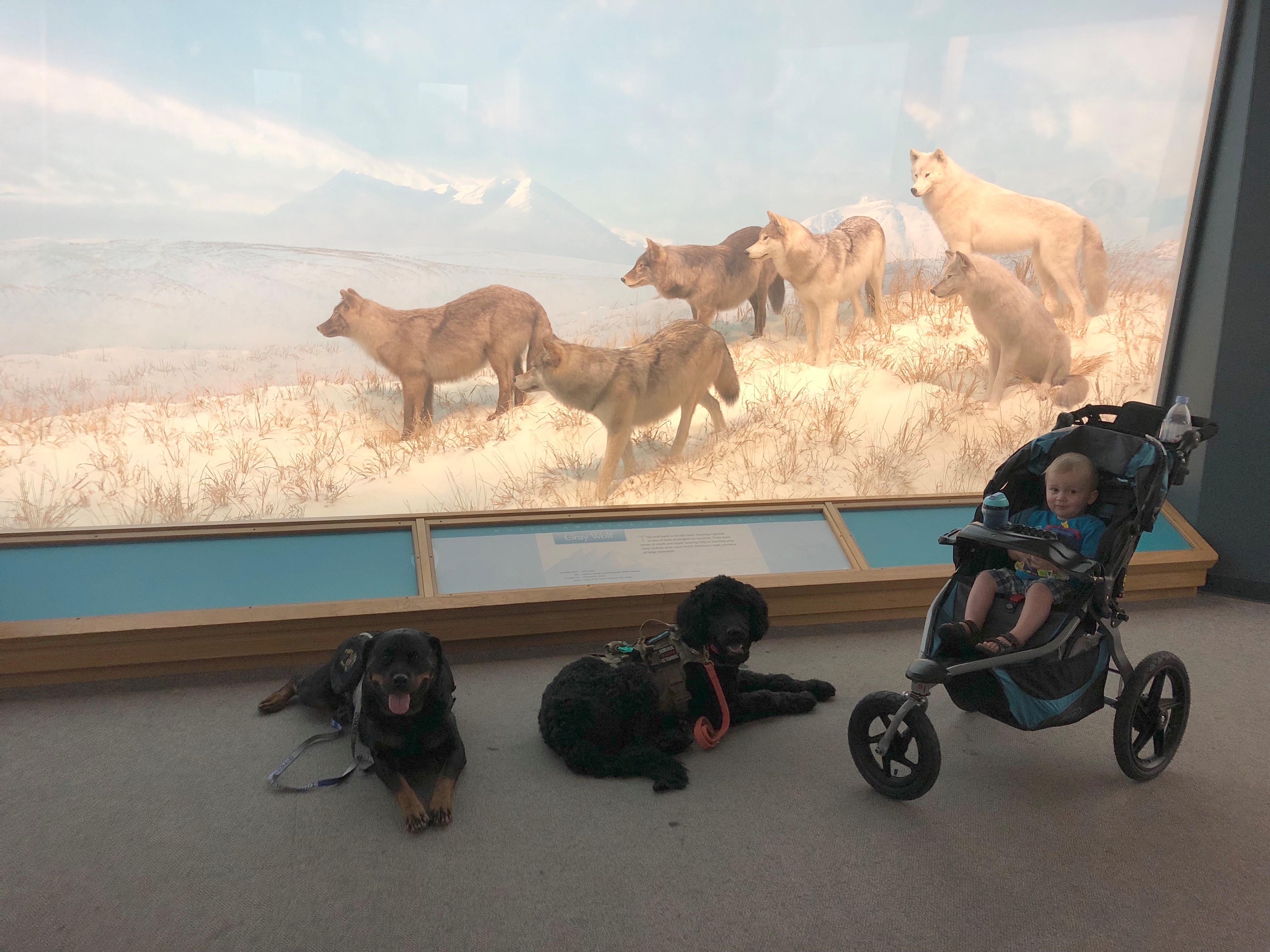 littlefoot museum